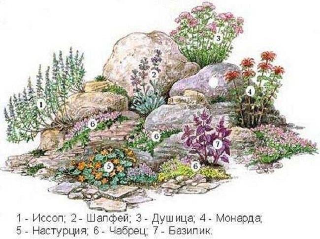 растения для мини альпинария