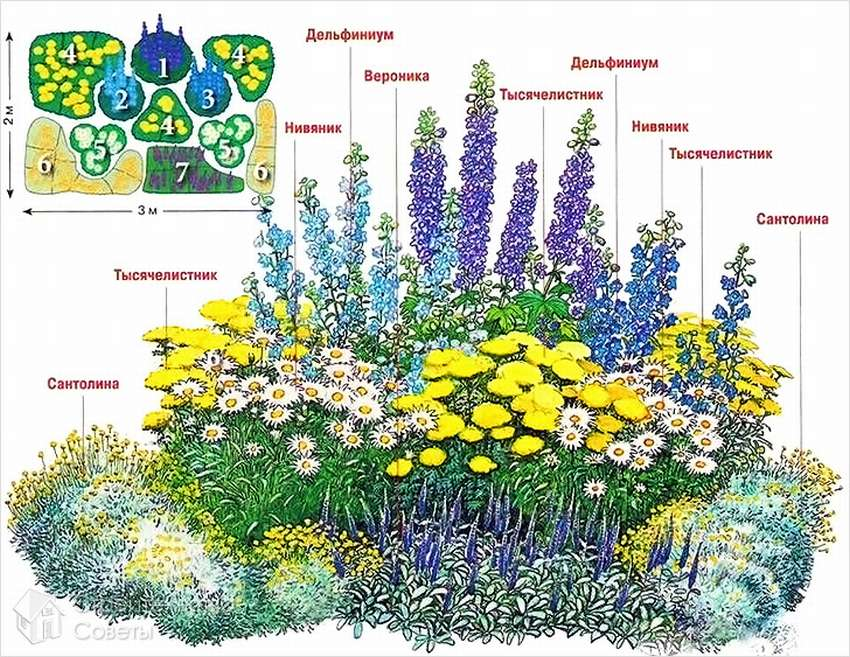 фото: схема миксбордера непрерывного цветения