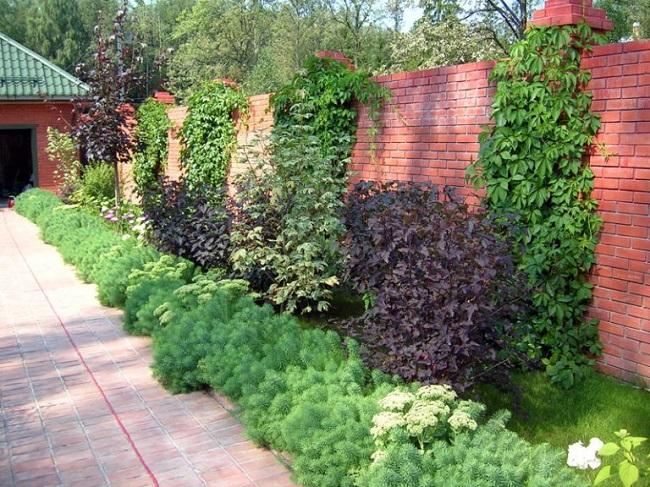 вьющиеся растения вдоль забора во дворе