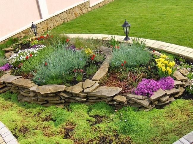 растения для каменной клумбы