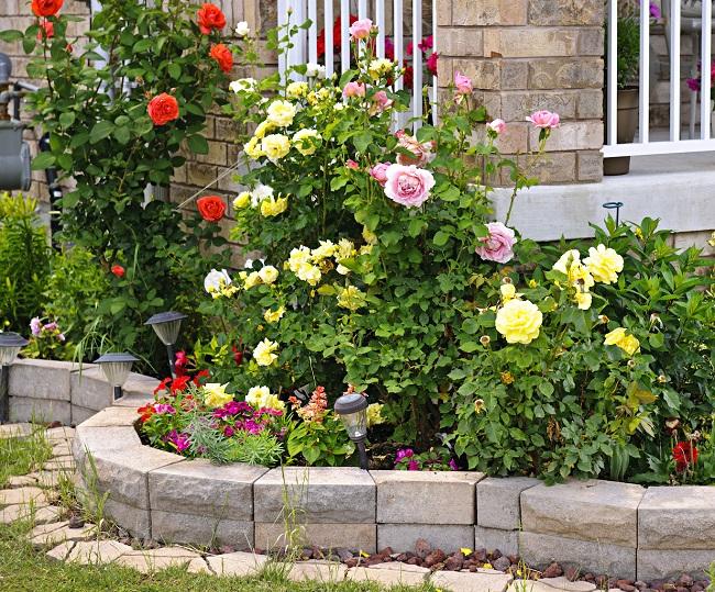 ландшафтный цветник с розами