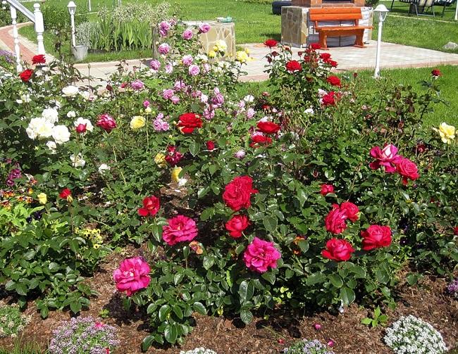 место для розария на даче