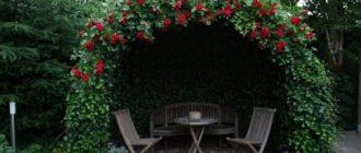 фото: вьющиеся растения для озеленения беседки