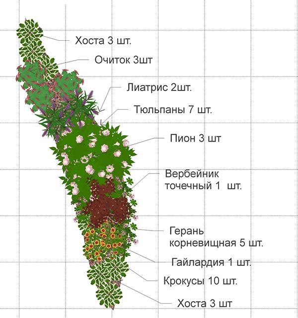 схема миксбордера из многолетников непрерывного цветения