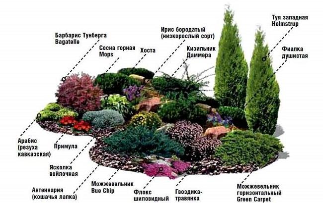 схема посадки растений альпийской горки