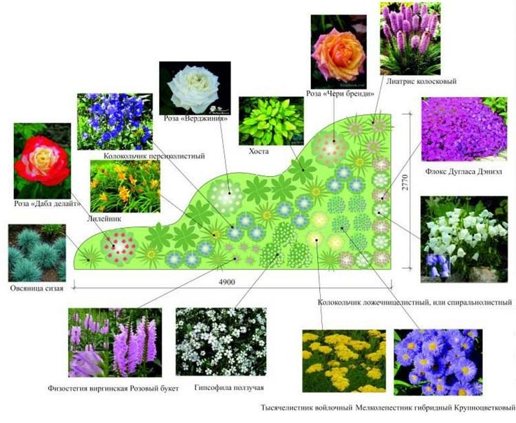 схема цветника с названиями - 1