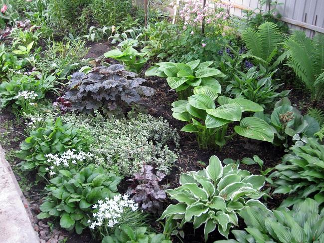 Растения для тенистого сада