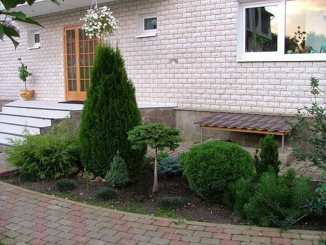 палисадник с хвойниками перед домом