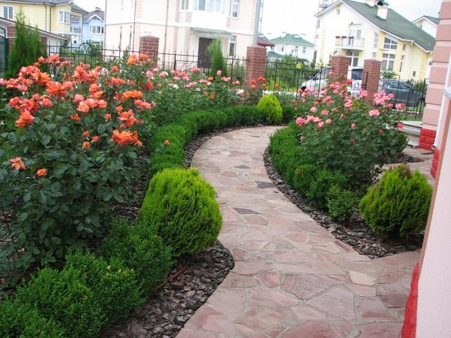 розарий во дворе участка