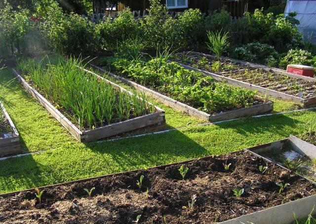огород на склоне