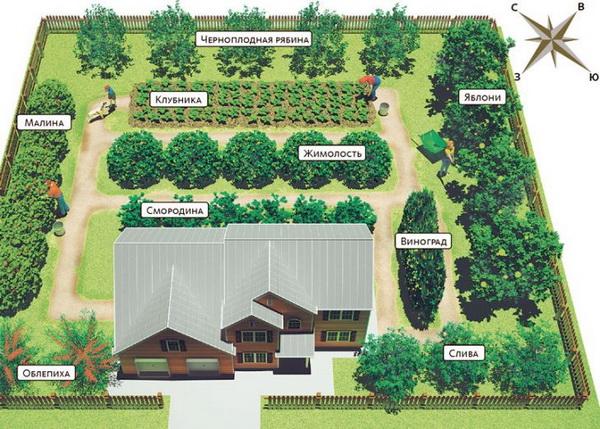 план высадки деревьев в саду на участке