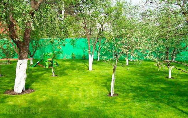совместимость плодовых в саду
