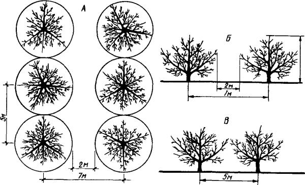 схема плотной посадки деревьев на участке