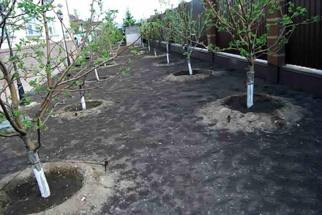 плодовый сад перед домом