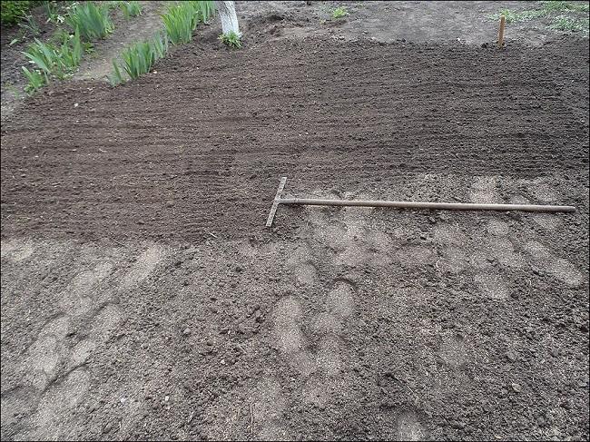 разравнивание почвы граблями для газона