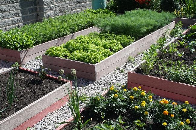 приподнятые грядки для огорода своими руками