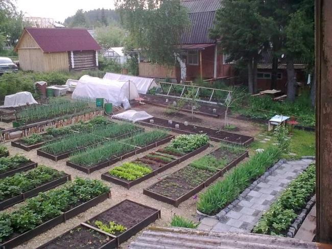 огород с приподнятыми клумбами
