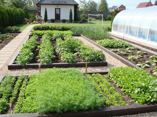 огородный дизайн садового участка