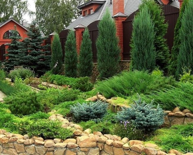 применение хвойных растений в ландшафте сада