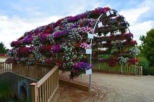 тоннель из цветов