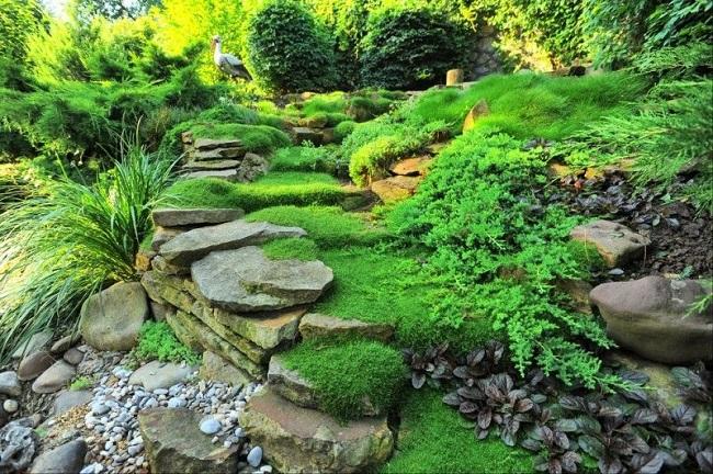 декоративный мох в ландшафтном дизайне