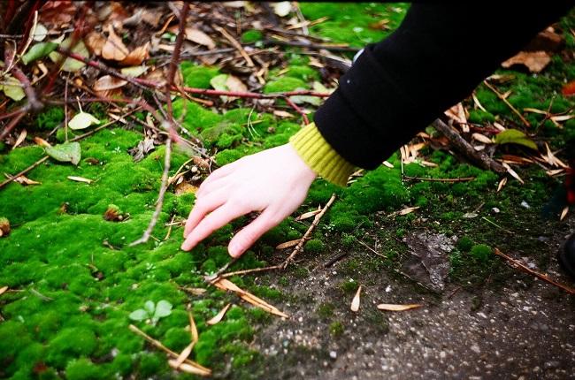 мох из леса