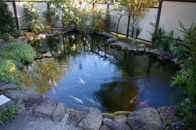 водоем для рыб на участке