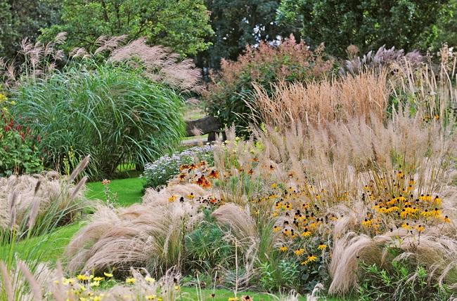 цветение декоративных трав