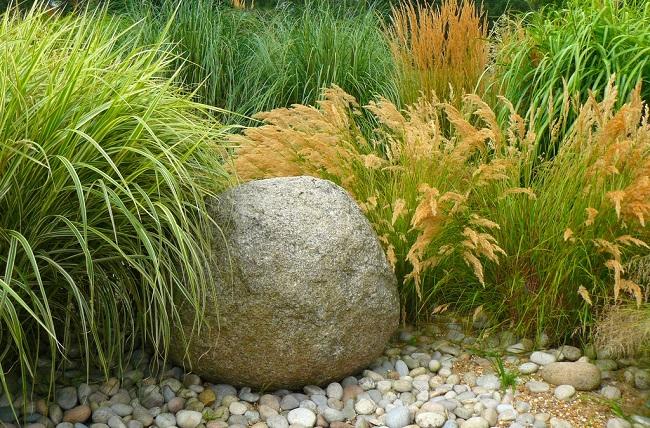 злаковые травы в ландшафтном дизайне
