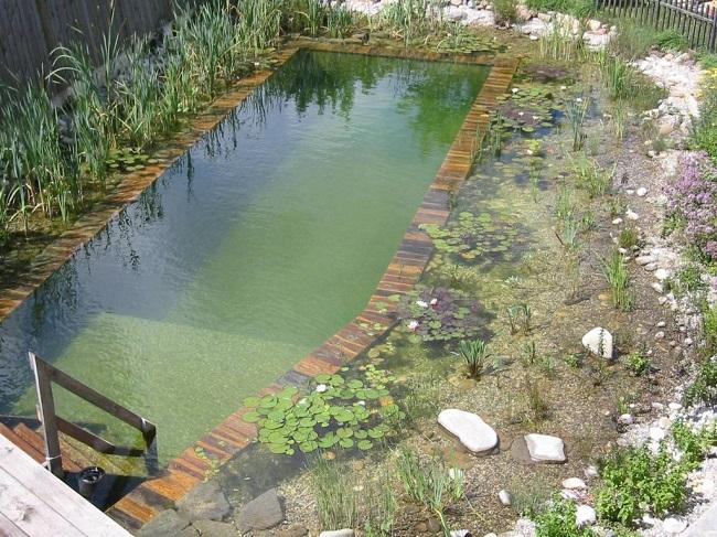пруд для купания на даче