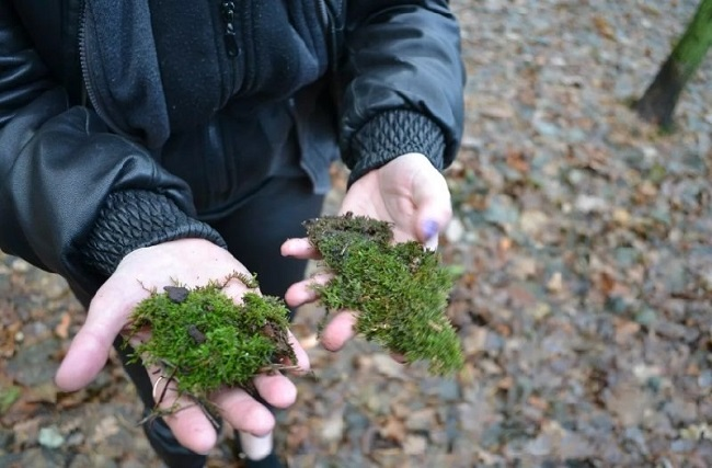 сборка мха в лесу