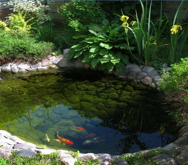 декоративный водоем с рыбами на участке
