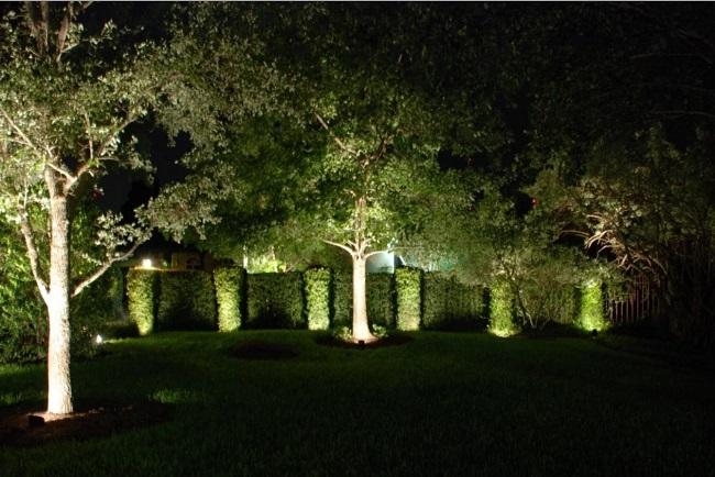 теплая подсветка деревьев и кустарников