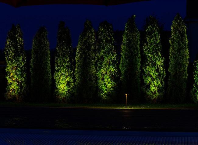 подсветка живой изгороди из хвойников