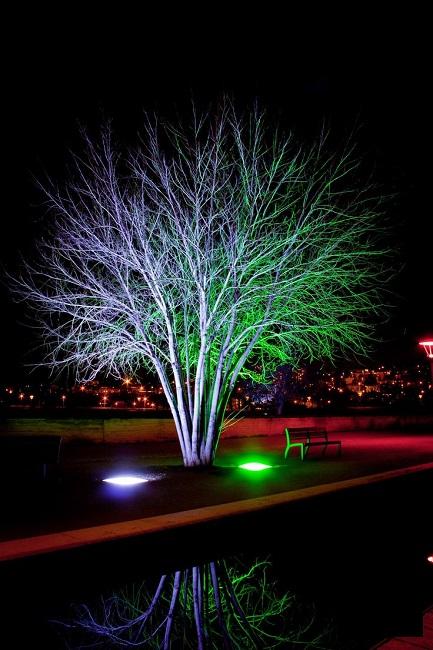 подсветка дерева двумя разноцветными прожекторами