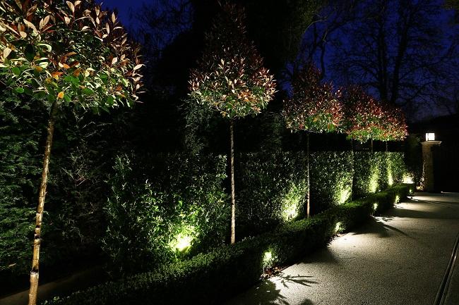 подсветка кустарников снизу