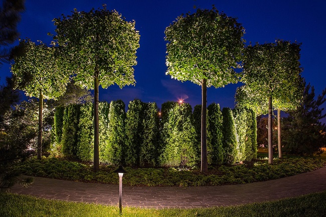 подсветка деревьев изнутри