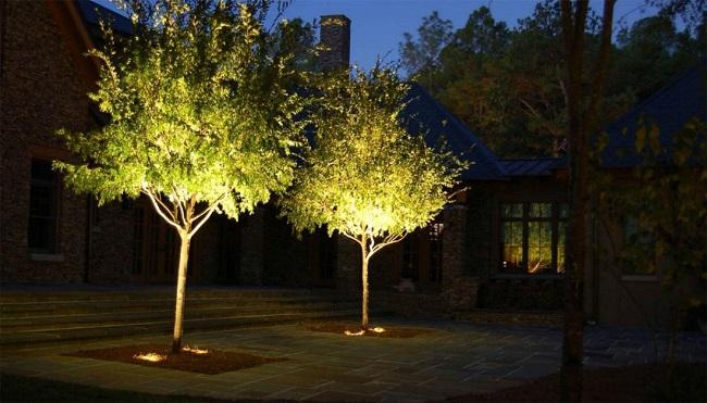 декоративная подсветка дерева снизу