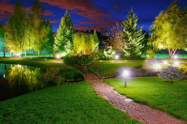 подсветка крон деревьев