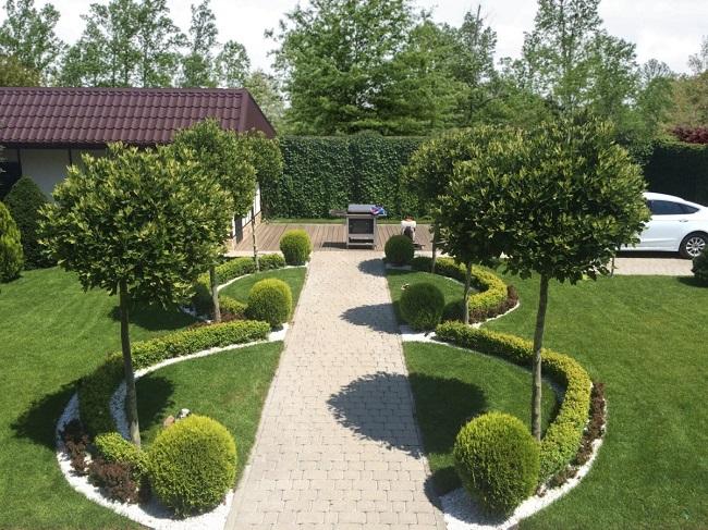 приемы расширения декоративными деревьями
