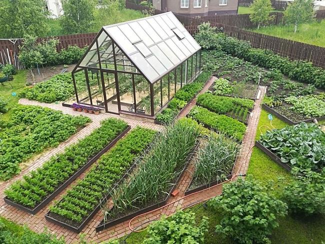 декоративный огород на 6 сотках