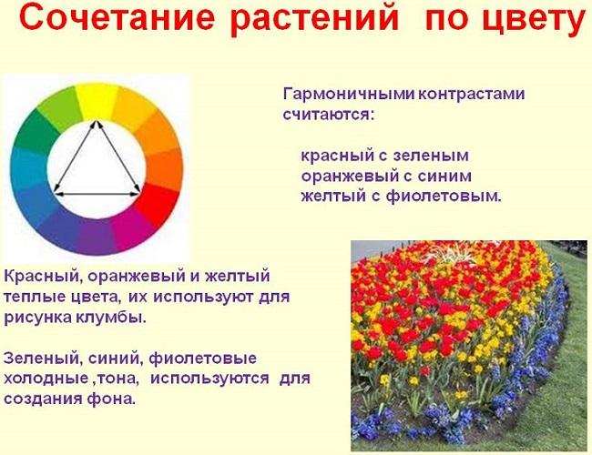 сочетание растений по цвету в клумбе