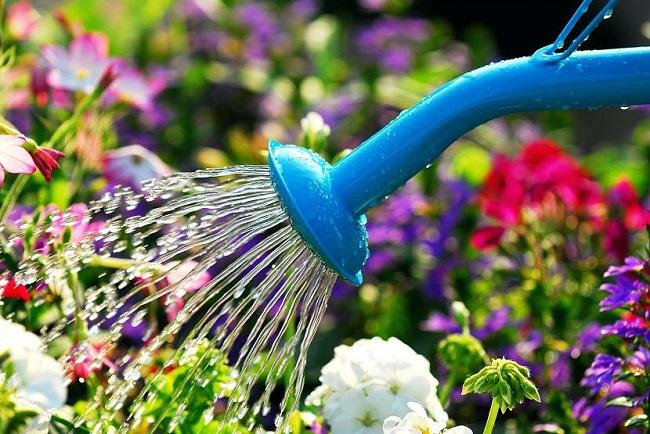 полив цветников в жару