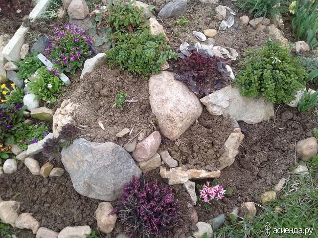 посадка низкорослых растений в альпийскую горку