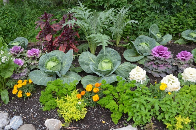 красивые клумбы с овощами