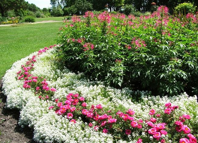 клумбы с почвопокровными цветами