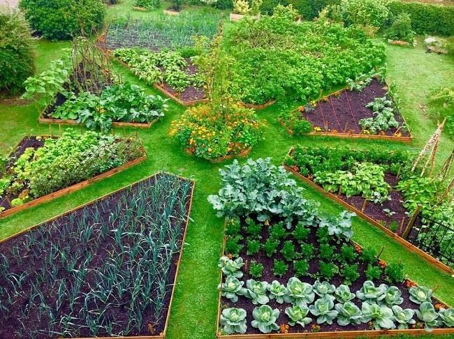 огород отделенный живой изгородью