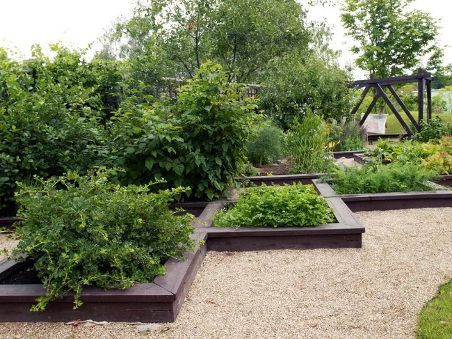 декоративный огород и сад