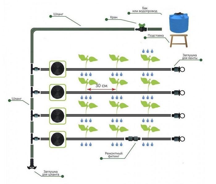 система капельного полива синьор помидор