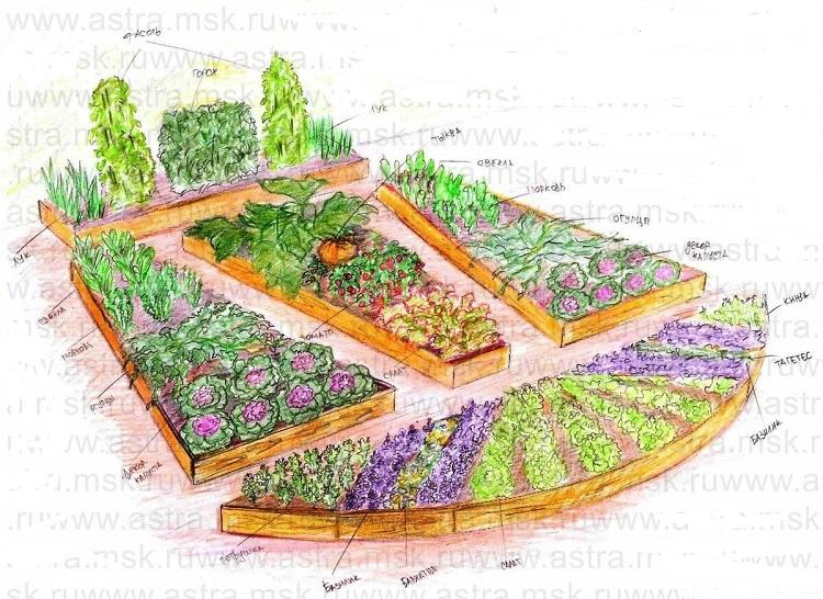 что посадить в декоративном огороде